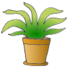 Plant Picture