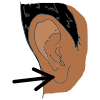 Earlobe Picture