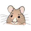 Mouse Picture