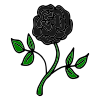Black Rose Picture