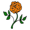 Orange Rose Picture