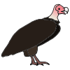 Vulture Picture