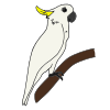 Cockatoo Picture