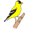 Goldfinch Picture