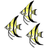 Three Angelfish Picture