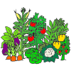 Vegetable Garden Picture
